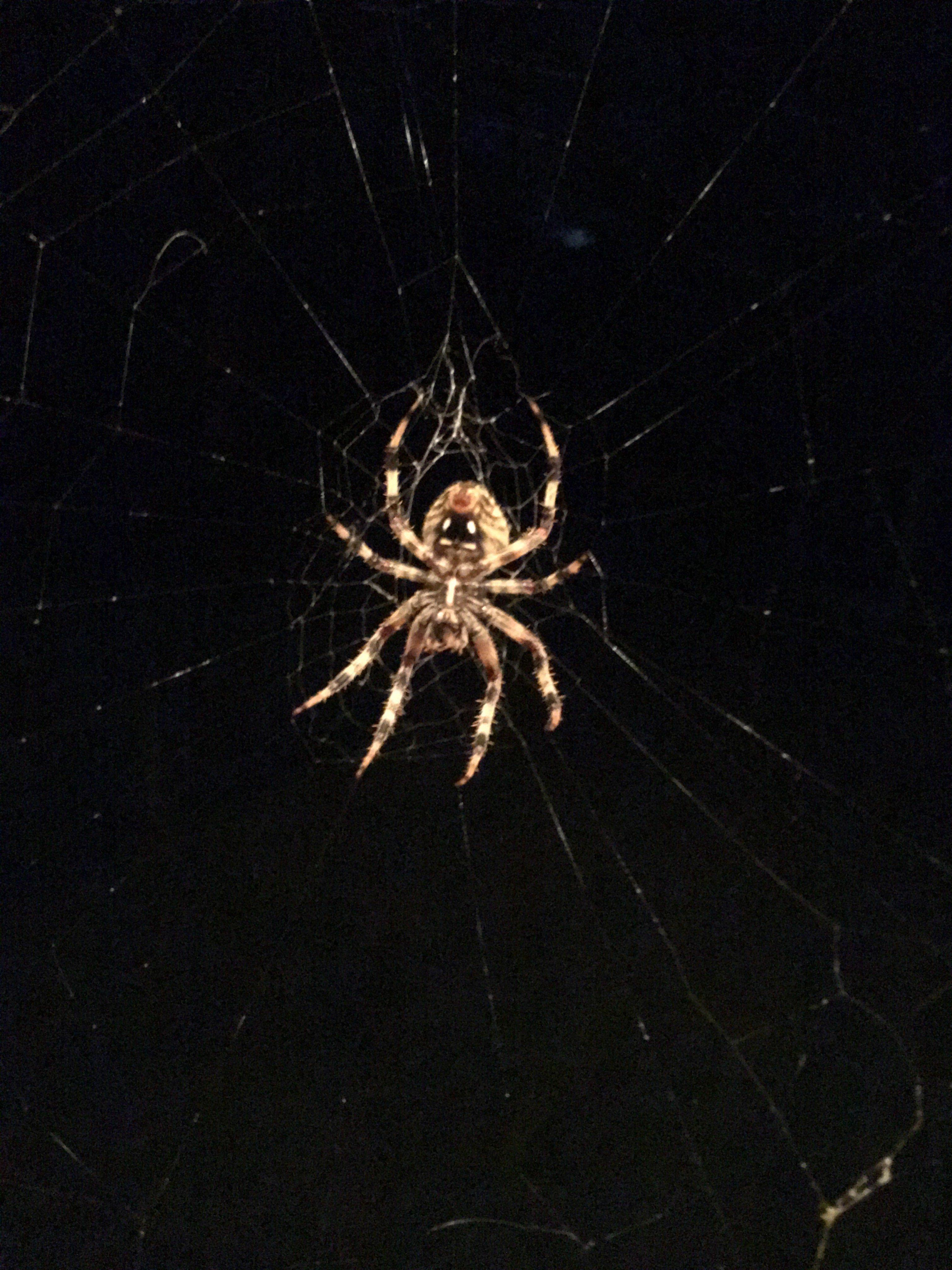 spider-jpg.23026